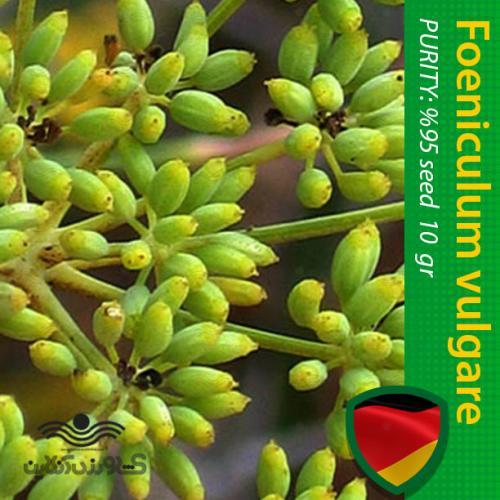 بذر رازیانه و روش کاشت
