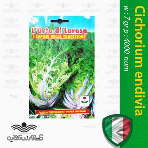 بذر آندیو سالادی سبز صورتی برگ درشت ایتالیایی و نحوه کاشت آندیو