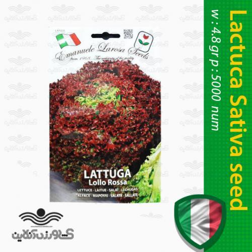 بذر کاهو قرمز ایتالیایی و روش کاشت کاهو