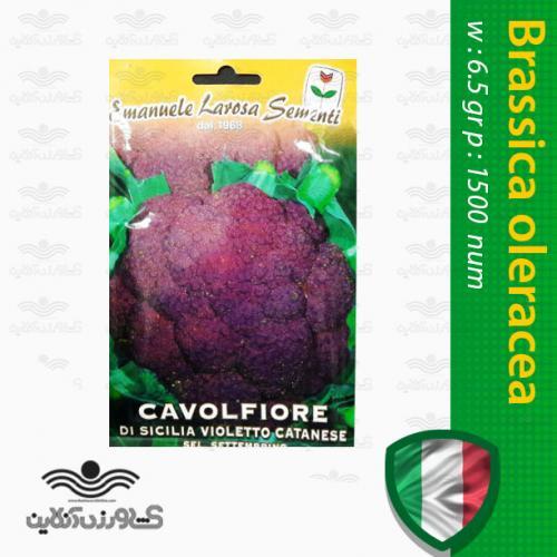 بذر گل کلم بنفش زودرس ایتالیایی و روش کاشت گل کلم