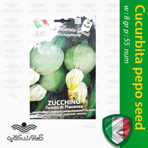 بذر کدو دلمه ایتالیایی و روش کاشت کدو