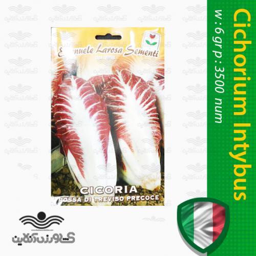 بذر کاسنی فرنگی قرمز بلند ایتالیایی و روش کاشت کاسنی
