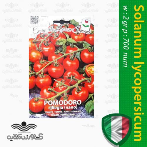 بذر گوجه فرنگی چری درشت نانو ایتالیایی و روش کاشت گوجه