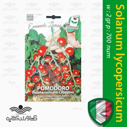 بذر گوجه فرنگی قرمز خوشه ای مینیاتوری ایتالیایی و روش کاشت گوجه