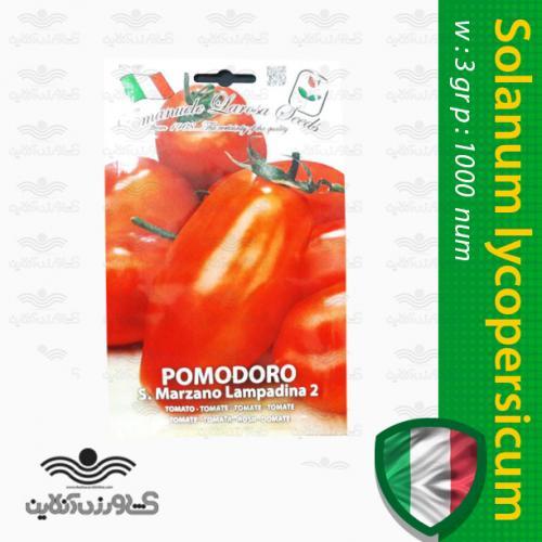 بذر گوجه فرنگی سان مارزانو ایتالیایی و روش کاشت