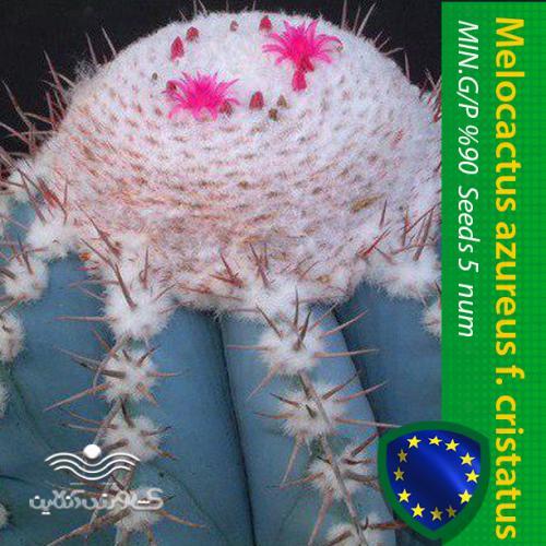 بذر کاکتوس ملو آبی