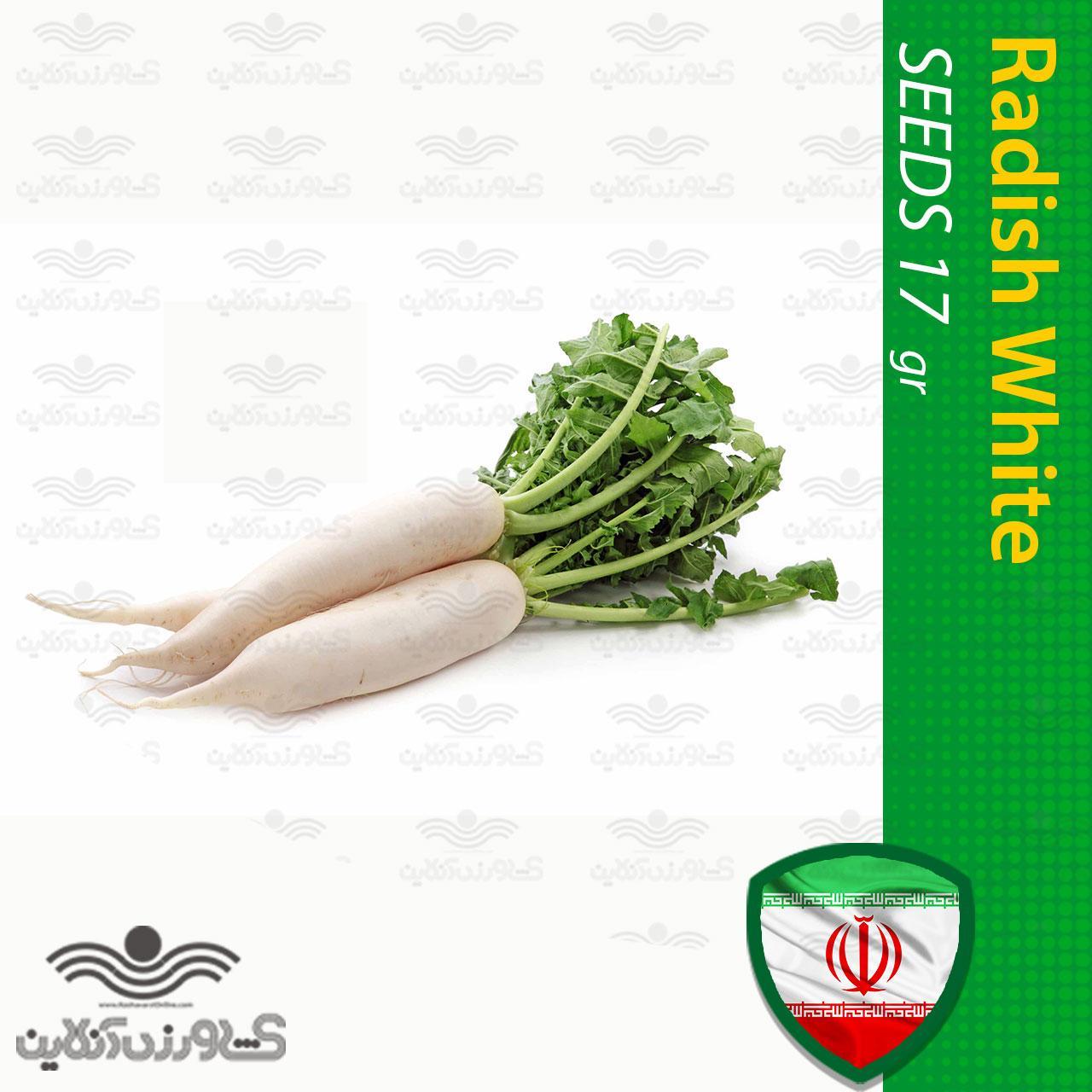 بذر ترب سفید کشیده خانگی و روش کاشت ترب