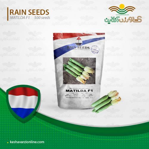 بذر کدو سبز پربار ماتیلدا هلندی