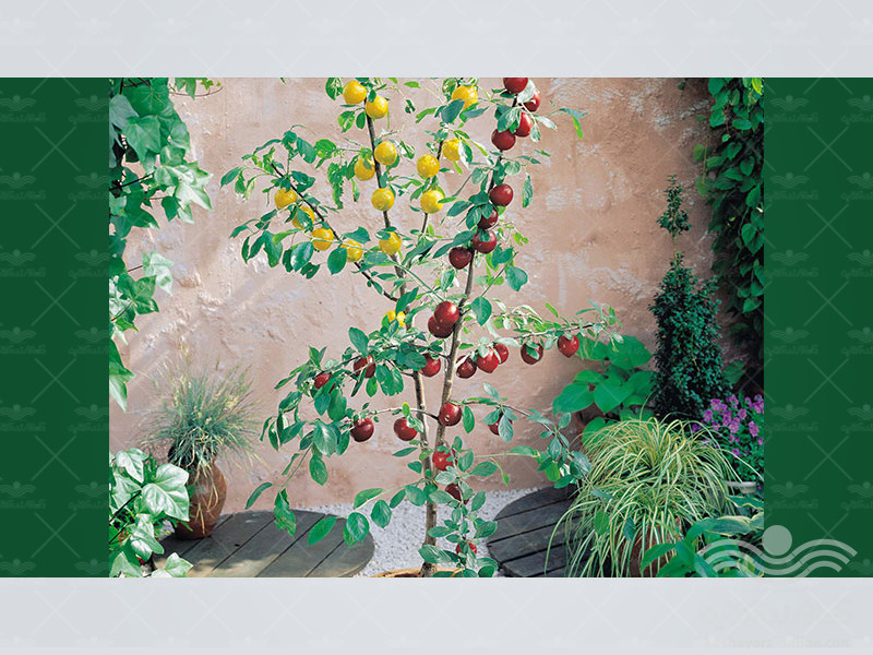 Botanical-Plum3