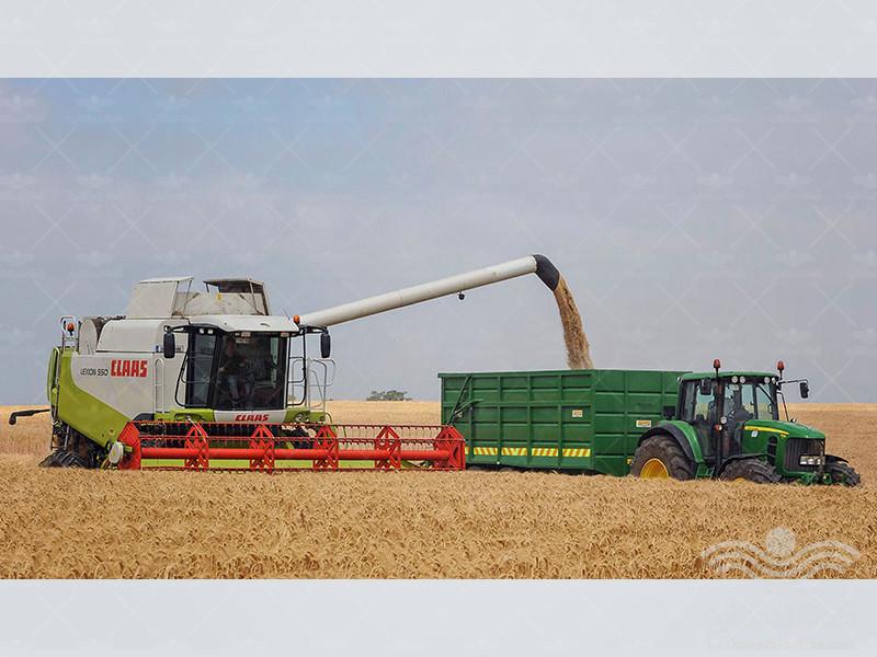 education-planting-of-barley1