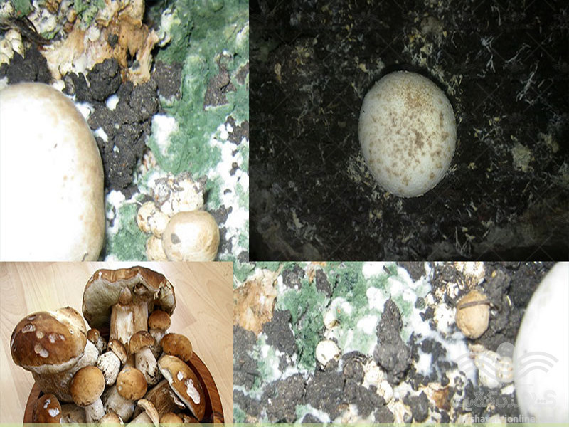 mushroom-pests-and-fungal-diseases1