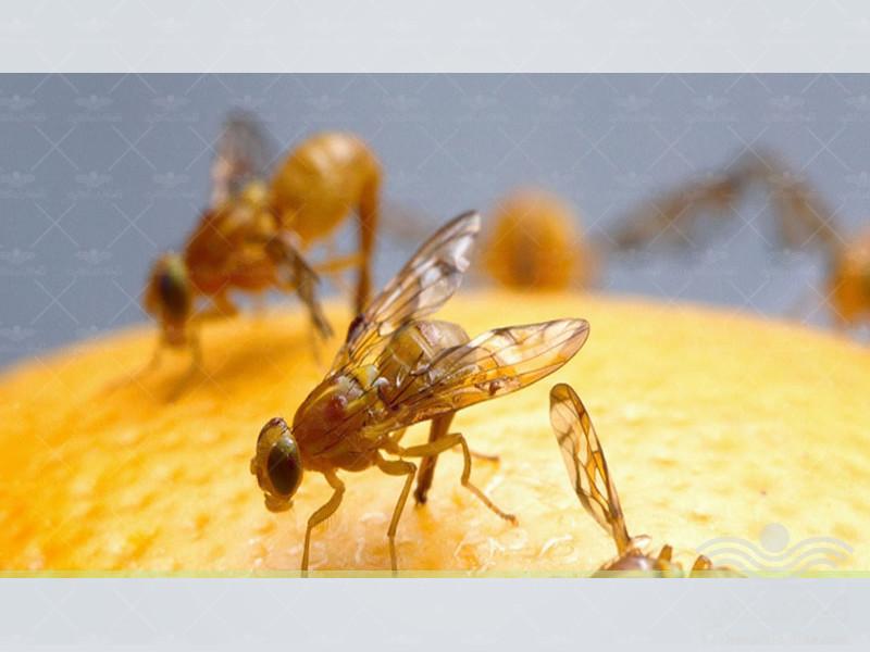the-kitchen-garden-pests1