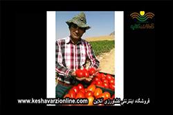 تصاویری از کاشت موفق بذر گوجه فرنگی لئوناردو در کشور