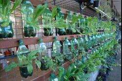 استفاده از قوطی نوشابه برای کاشت گل و گیاه