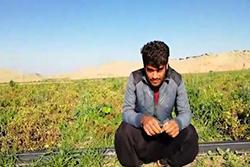 زودرس ترین گوجه در ایران بنام رکسانا