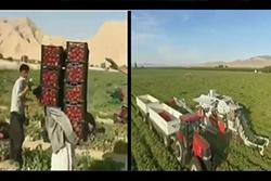 تفاوت کشاورزی سنتی و مدرن