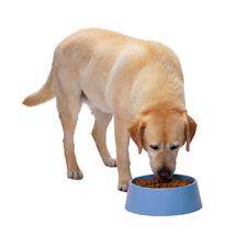 آموزش غذا دادن به سگ