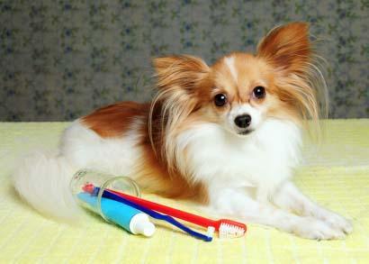 مسواک زدن دندان سگ