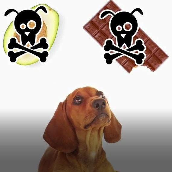 10 غذای مضر و سمی برای حیوانات خانگی (بخش اول)