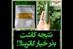 بذر خیار گلخانه ای پرگل کاترینا