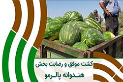 رضایت مشتری از کشت هندوانه ی پالرمو