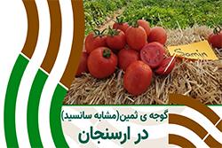باردهی گوجه ی ثمین در فارس