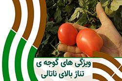 بازدید از مزرعه ی گوجه ی ناتالی